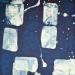 Plankton #12 E_0000_3625 copy