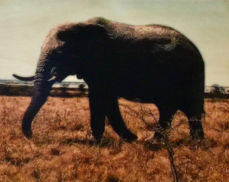 Etosha Park, Majestic Elephant