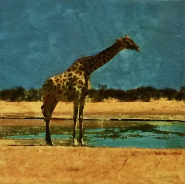 Etosha Park, Pensive Giraffe