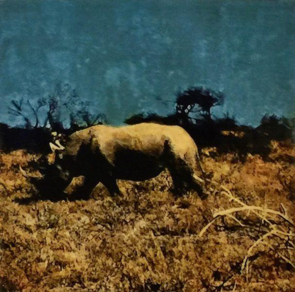 Etosha Park, Rhinoceros
