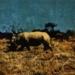 ml_12_ Etosha Park, Rhinoceros