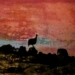 ml_23_Twyfelfontein-Guinea-Fowl-at-Sunset