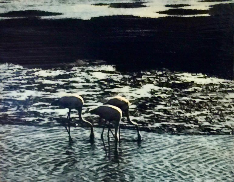 The three Flamingos, Swakopmund
