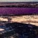 ml_43_Swakopmund-Salt-Pan