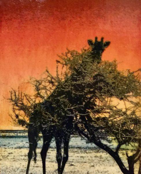 Giraffe in Etosha Park
