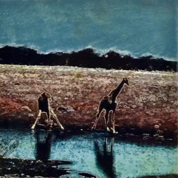 Etosha Park, Giraffes at waterhole 1